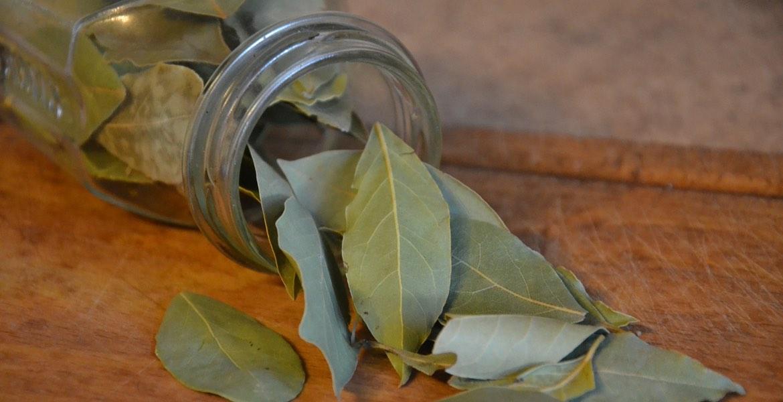 Edle Lorbeerblätter. Leicht bitter wurde diese Pflanze seit Jahrhunderten für ihre vielseitige Anwendungsweise gepriesen.