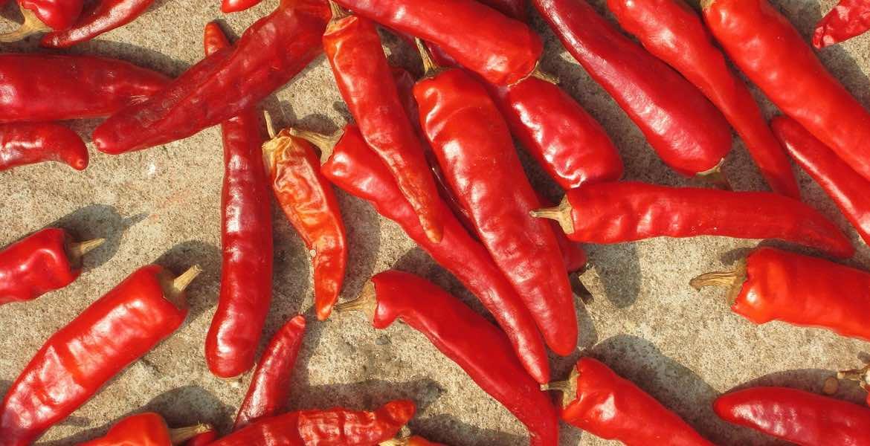 Chili, Chilischote, Zutaten von A-Z, greek-cuisine.com, Maria Pliatsika